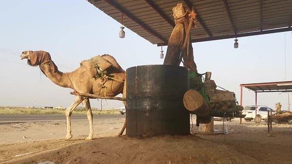 سعودی عرب: تِلوں کا تیل تیار کرنے کے لیے کولہو کا روایتی طریقہ رائج