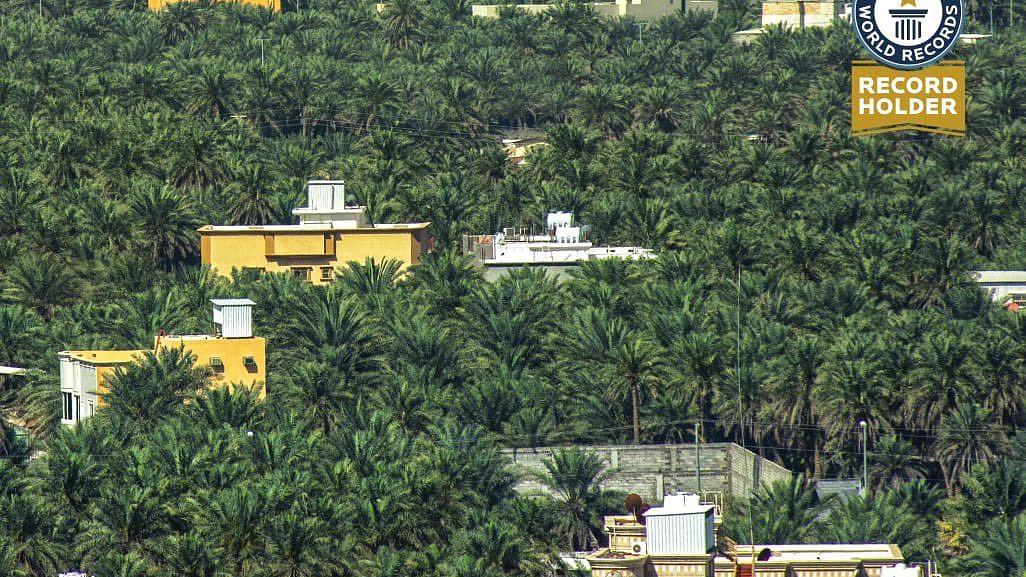 سعودی عرب: کھجور کے درختوں کا دنیا کا سب سے بڑا باغ گینز بک میں شامل