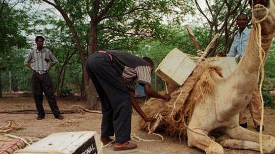 ایتھوپیا کی موبائل اونٹ لائبریریاں