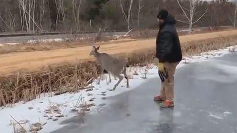 ٹھنڈ سے جمی جھیل میں پھنس گیا ہرن، دلچسپ انداز سے نکالا گیا باہر، دیکھیں ویڈیو