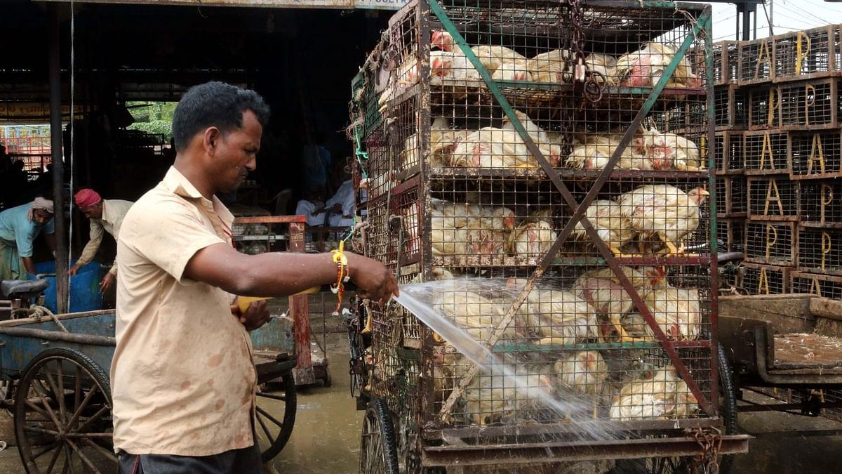 مرغا جان سے بھی گیا اور کاروباریوں کو مزہ بھی نہیں آ رہا، قیمتوں میں 50 فیصد کی گراوٹ