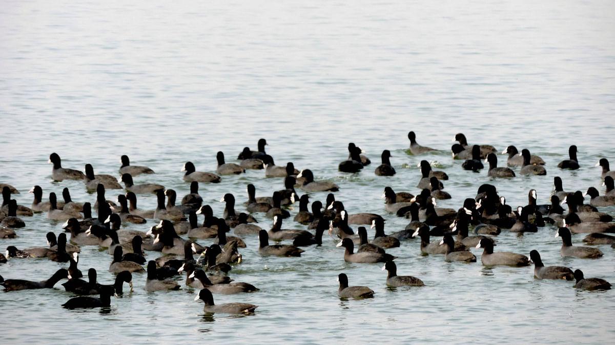 ملک کی بیشتر ریاستوں میں پرندوں میں برڈفلو کی تصدیق