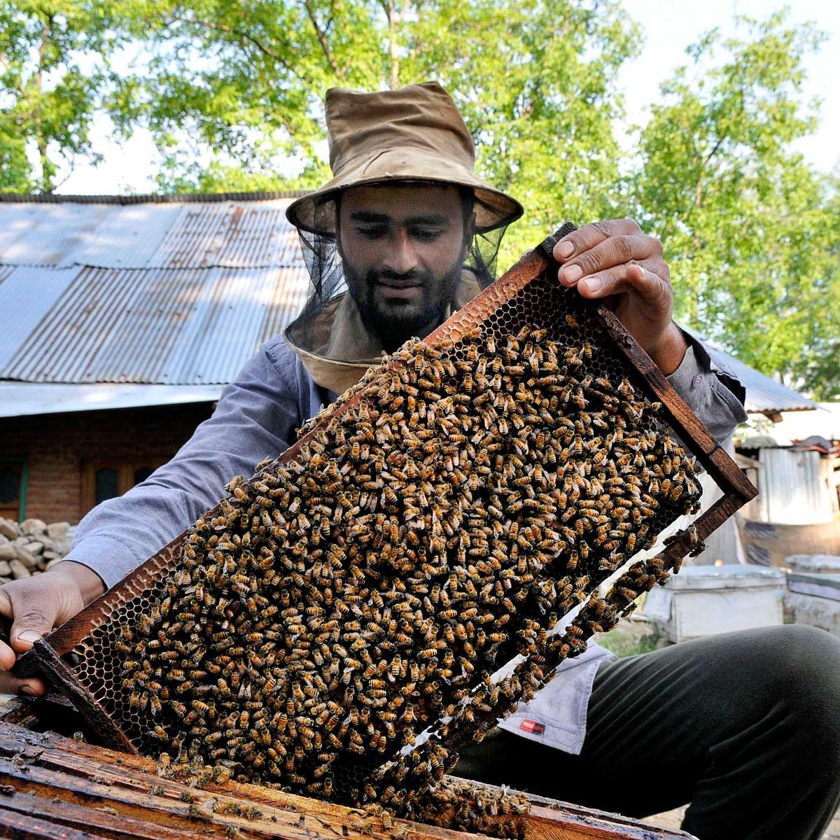 شہد کی مکھی / GettyImages