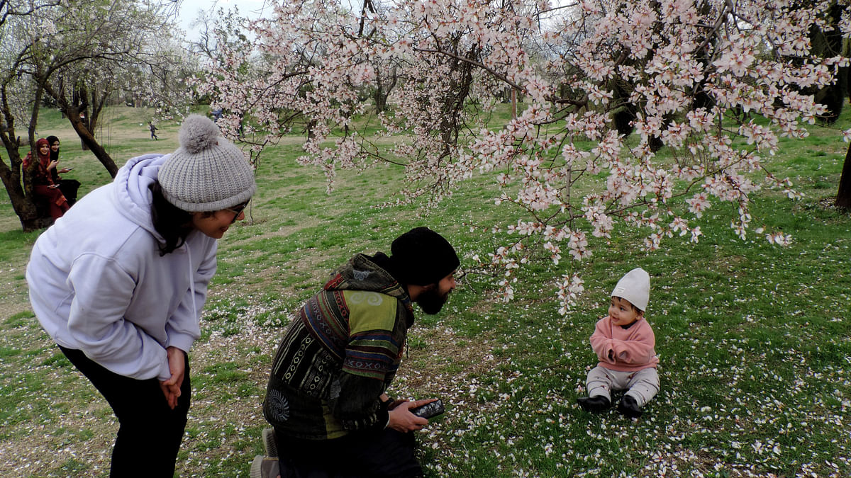کشمیر: برف و باراں کے بعد موسم خوشگوار، مغل باغوں کی رونق بحال