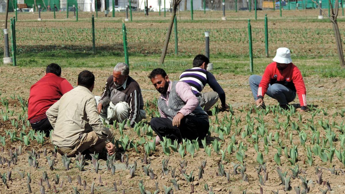کشمیر: باغ گل لالہ کو سجانے سنوارنے کا کام شد ومد سے جاری