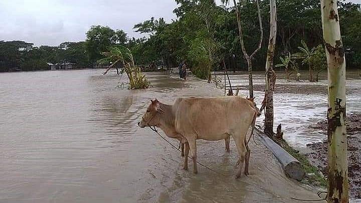 بہار: کورونا سے بے حال کسانوں پر اب 'یاس' کا قہر، کئی اضلاع میں فصل تباہ