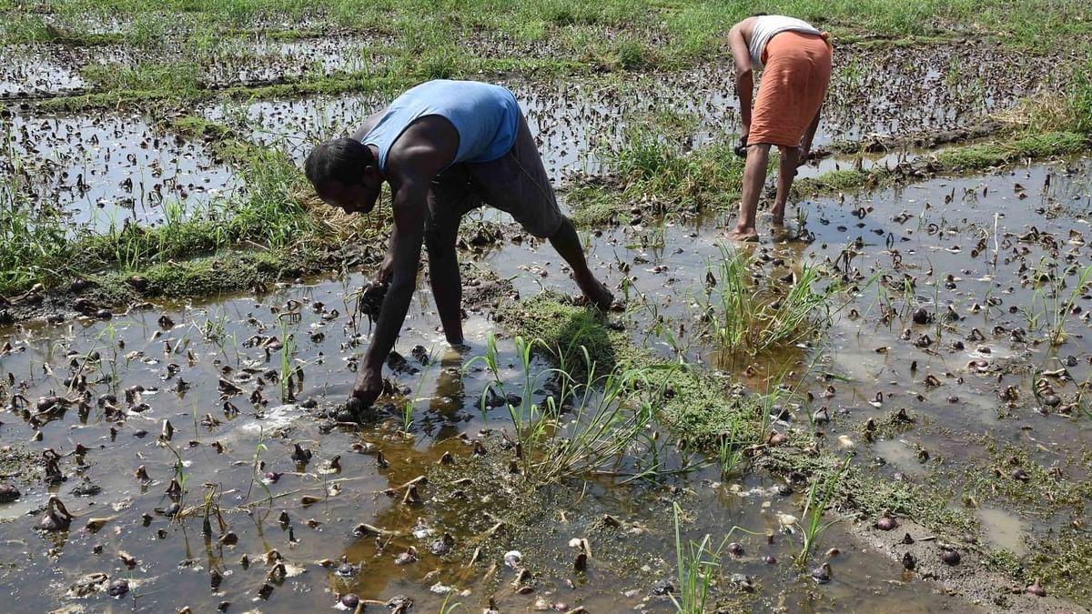 کسانوں کی خراب حالت کے لئے بی جے پی حکومت ذمہ دار : اکھلیش
