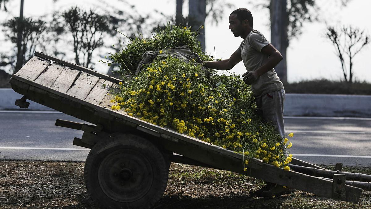 بگی میں چارہ رکھتا ہوا کسان / Getty Images