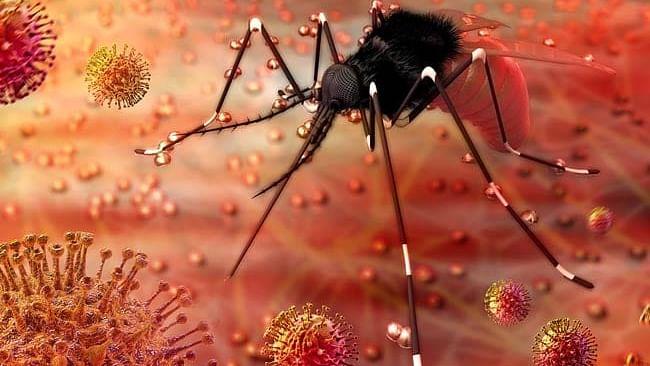 نیا خطرہ! مہاراشٹر میں زیکا وائرس کا پہلا معاملہ، کیرالہ میں بھی دو نئے کیسز ملنے سے کھلبلی