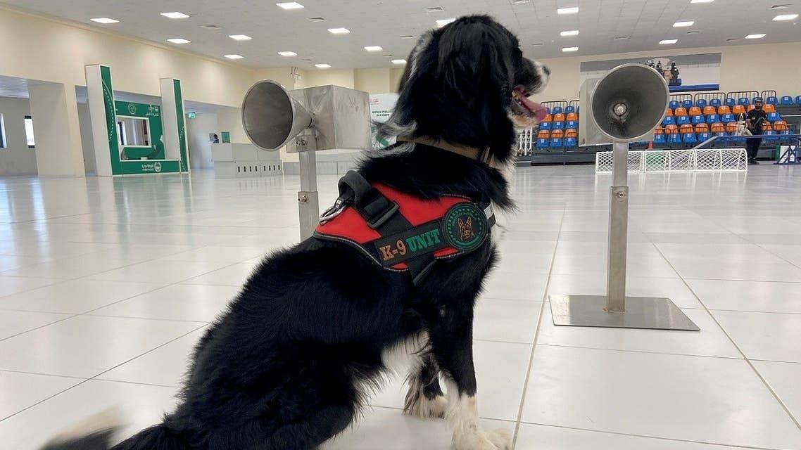 دبئی پولیس جاسوس کتے