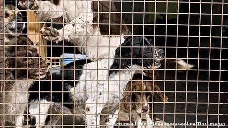 انڈونیشیا: کتے کا گوشت بیچنے والے تاجر کو جیل بھیج دیا گیا
