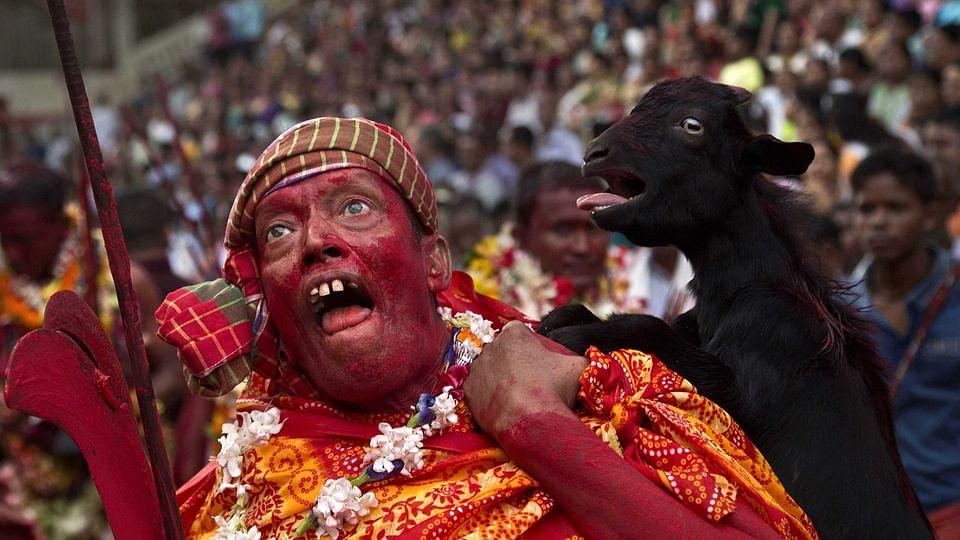 गुवाहाटी के कामाख्या मंदिर में देवधानी त्योहार के दौरान बलि के लिए अपने कंधे पर बकरी ले जाता पुजारी. (फोटो: AP/अनुपम नाथ)