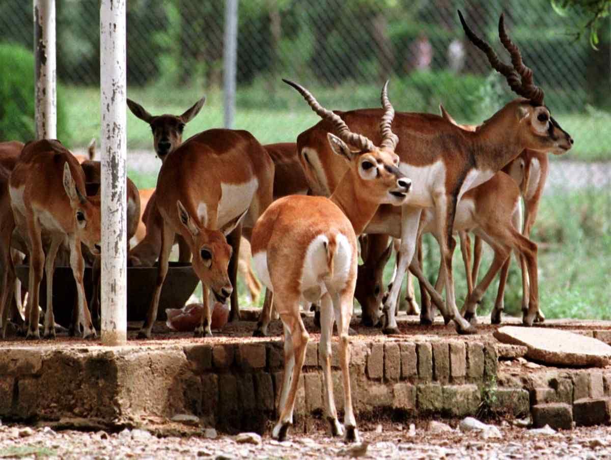 काला हिरण शिकार मामला: जानिए सलमान पर हैं कितने केस