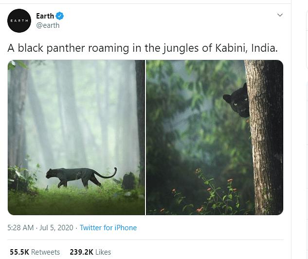 कर्नाटक:ब्लैक पैंथर की ये तस्वीर वायरल,लोग कह रहे-ये तो 'बघीरा' है