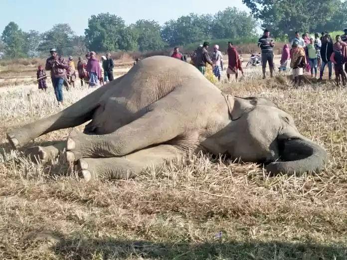 प्रतापपुर में फिर हुई हथिनी की मौत, जांच में जुटी पुलिस