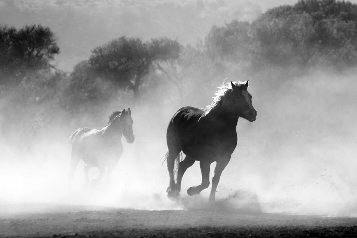 सपने में पशु देखने का मतलब - Dream Of Animal Meaning