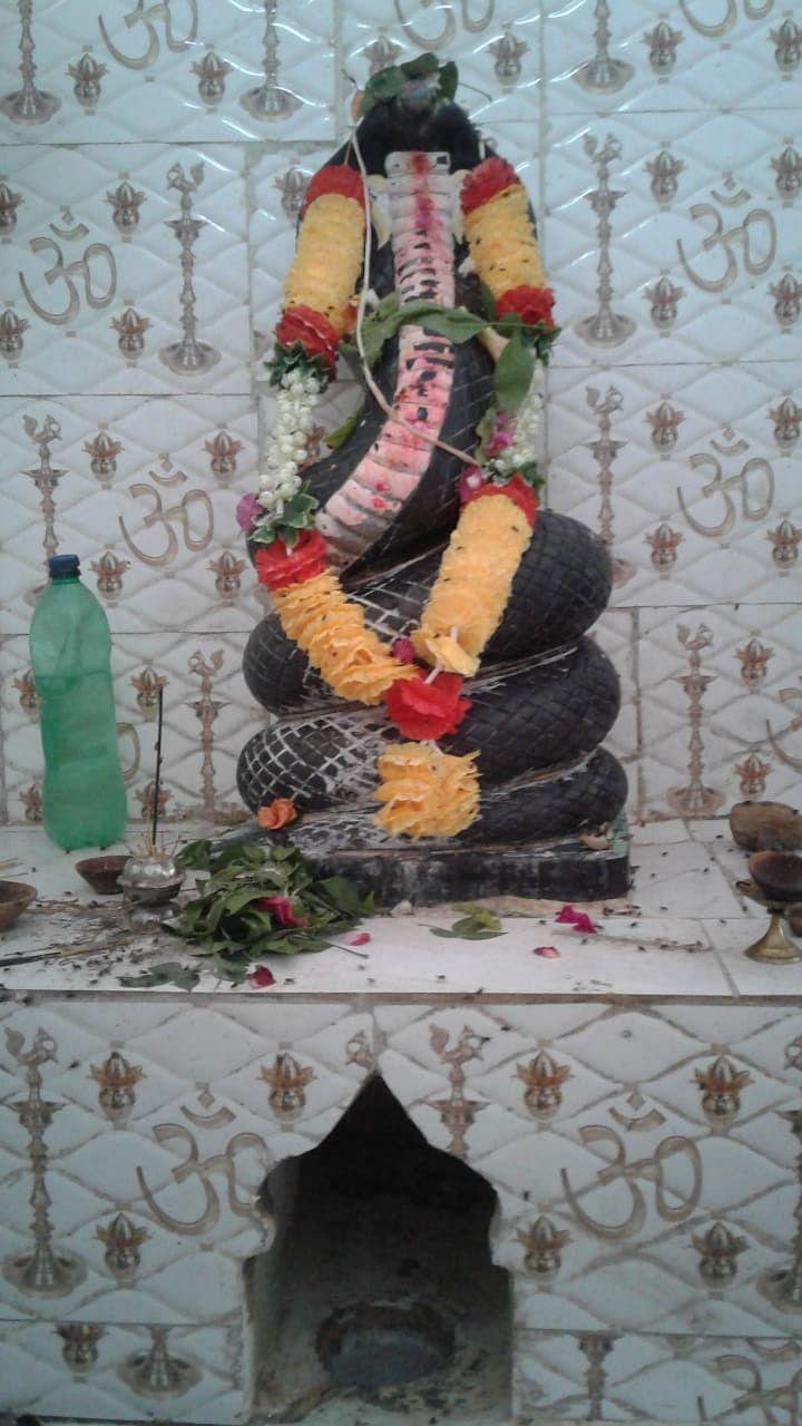 हमीरपुर : नाग देवता के मंदिर में पूजा करने से काल सर्प दोष से मिलती है निजात