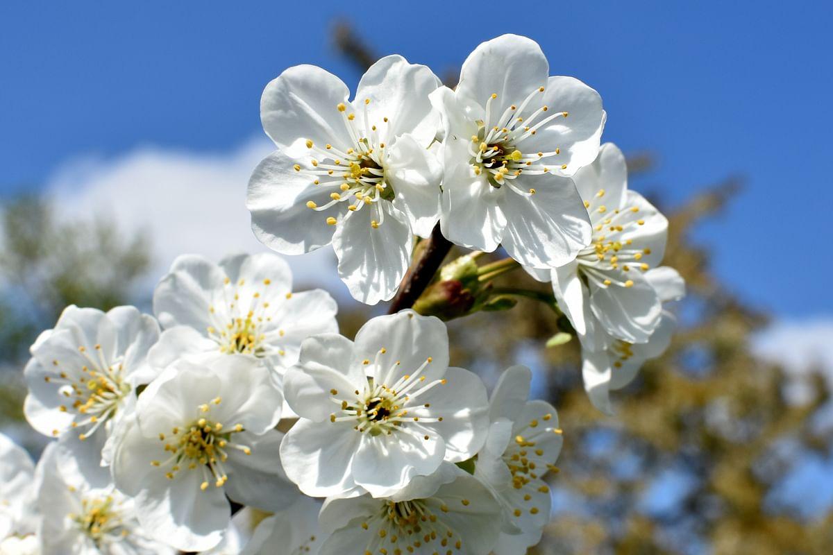 सपने में सफेद फूल देखने का मतलब - Dream Of White Flower Meaning