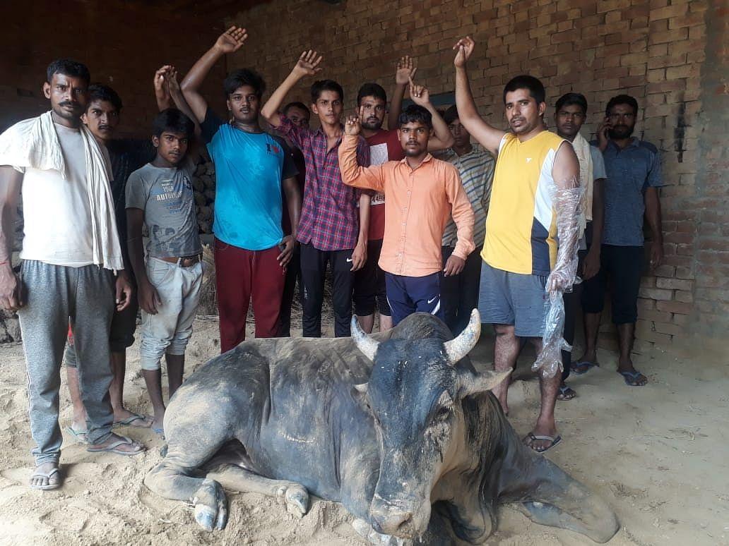 कटीले तारों में फंसकर बेसहारा गोवंश हुआ जख्मी, ग्रामीणों ने किया हंगामा
