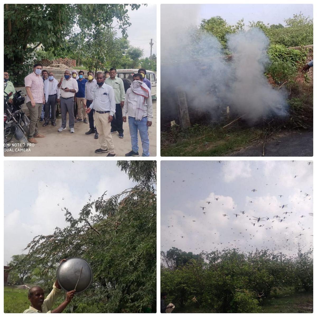 कानपुर के आस-पास मंडरा रहा टिड्डी दल, किसानों के साथ अधिकारी भी कर रहे रतजगा
