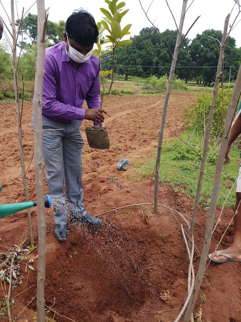तोडंगकेल गांव में भाजपा कार्यकर्ताओं ने किया पौधरोपण