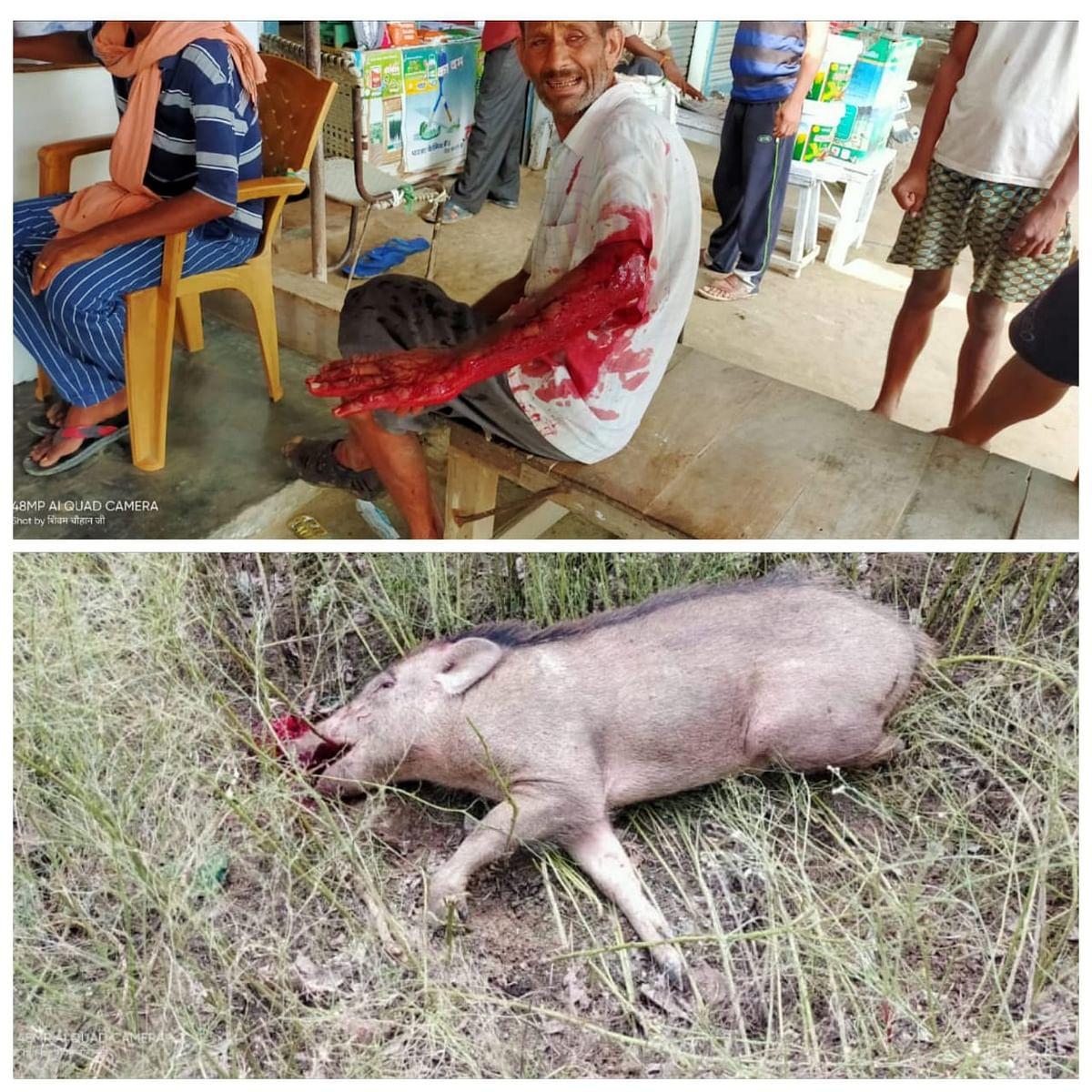 खुंखार जंगली सुअर ने किसान पर किया जानलेवा हमला