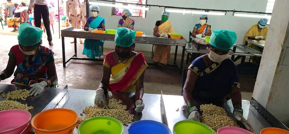बस्तर के स्वादिष्ट काजू ने कोरोना संकट में बढ़ाई वनवासियों की आमदनी