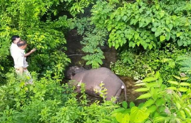 उत्तराखंडः राजाजी नेशनल पार्क में ट्रेन की टक्कर से हाथी के बच्चे की मौत