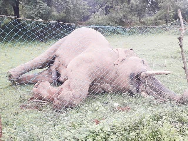 करंट से हाथी की मौत, ग्रामीण ने स्वीकार किया अपराध