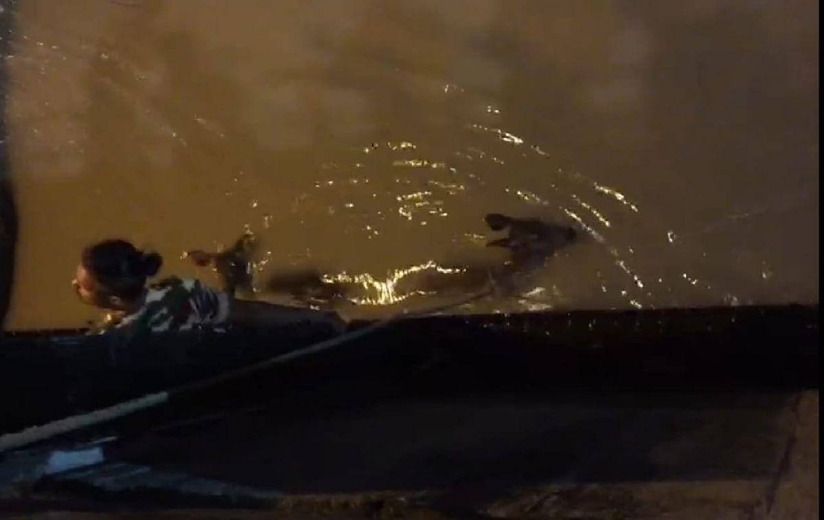 ऋषिकेशः बैराज में पानी पीने उतरे एक सांभर की जाल में फंसने से मौत, दूसरा गंगा में बहा