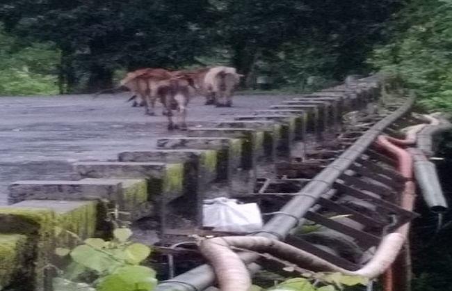 असम : सेना छावनी के पास पुल की रेलिंग पर लटकता मिला आईईडी