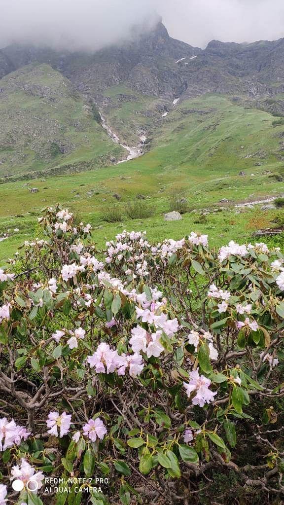 यौवन पर फूलों की घाटी लेकिन पर्यटक नदारद