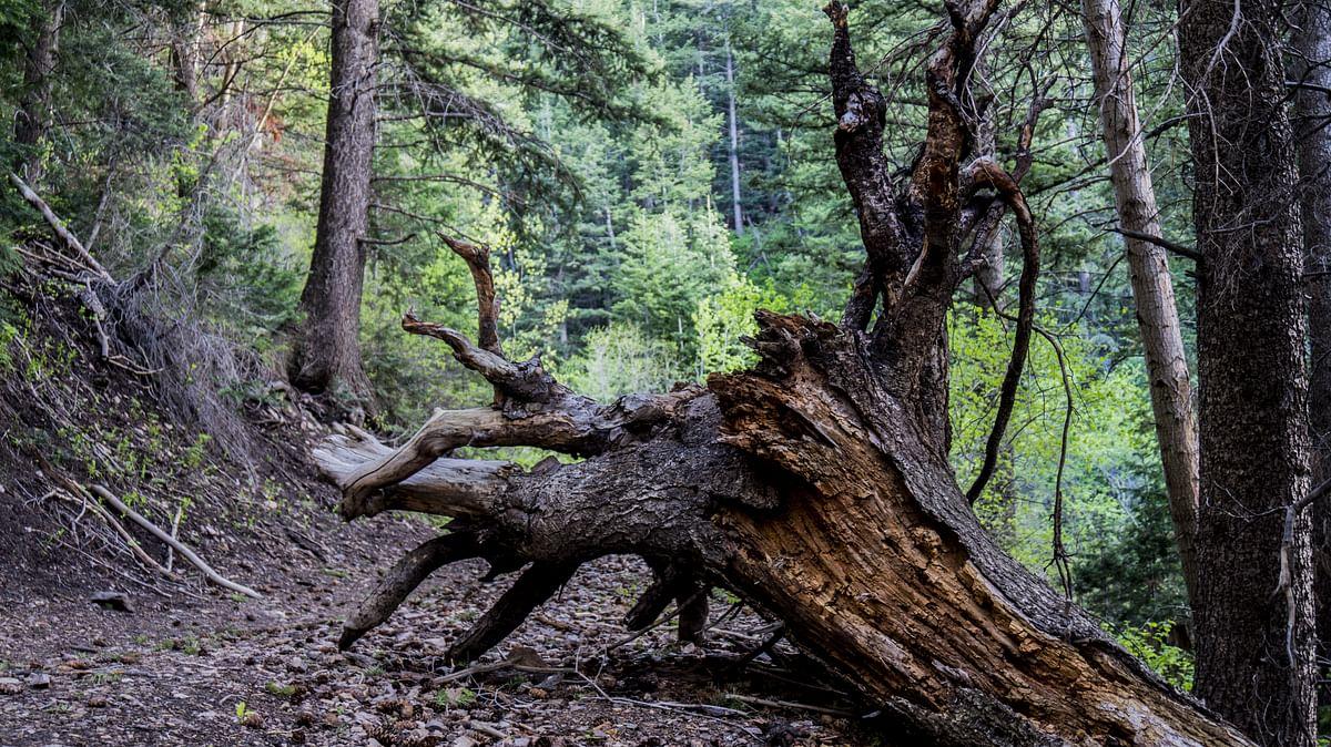 सपने में जड़ें काटना देखने का मतलब - Dream Of Cutting Roots Meaning