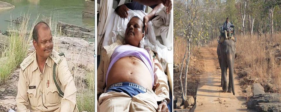 पन्ना टाइगर रिजर्व में हाथी के हमले से रेंजर की मौत
