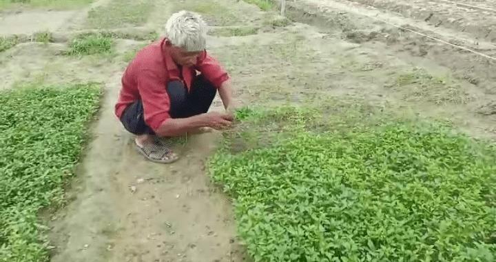 किसानों की आय दोगुनी करने में मददगार होगी मशरूम की खेती