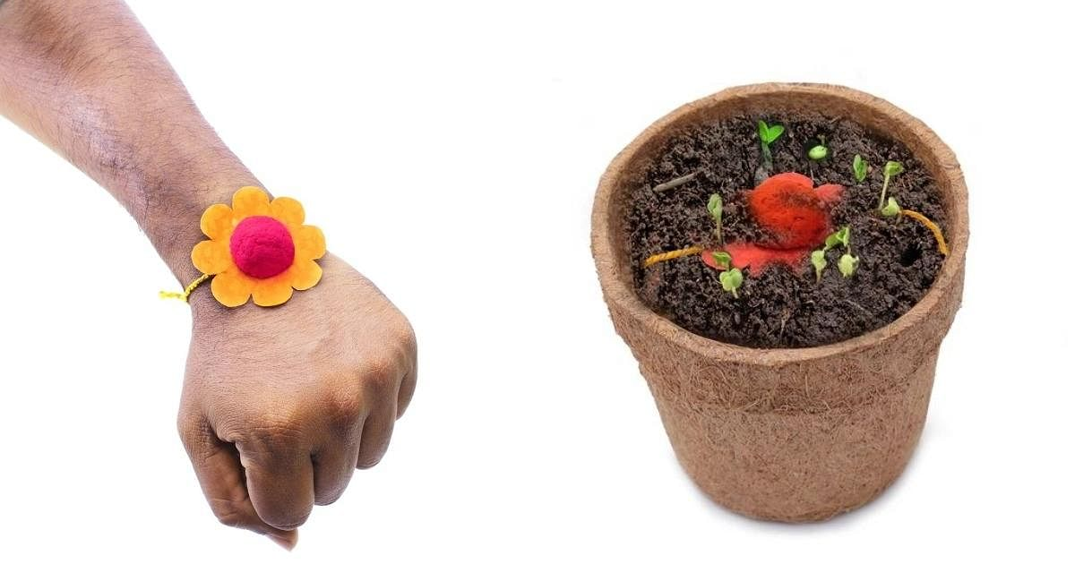अपने पसंदीदा पौधे के बीजों की बनाएं राखी