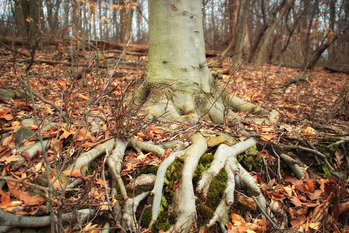 सपने में जड़ें देखने का मतलब - Dream Of Roots Meaning
