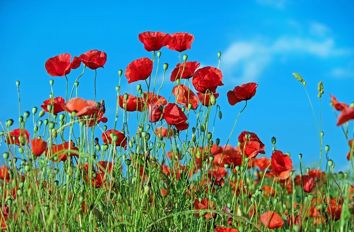 सपने में लाल फूल देखने का मतलब - Dream Of Red Flower Meaning