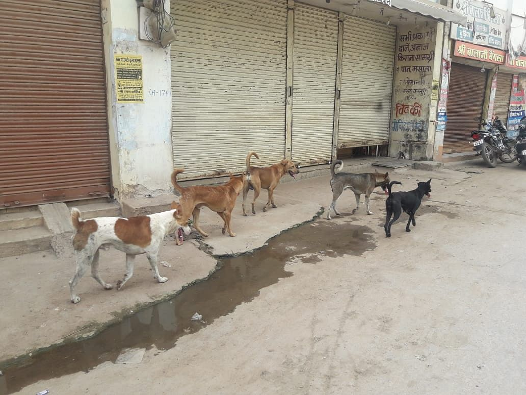 लाकडाउन में बेसहारा मवेशियों व कुत्तों की नहीं मिट रही भूख