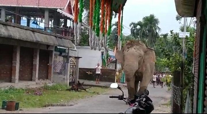 रिहायशी इलाके में घुसा हाथी, मची अफरा-तफरी