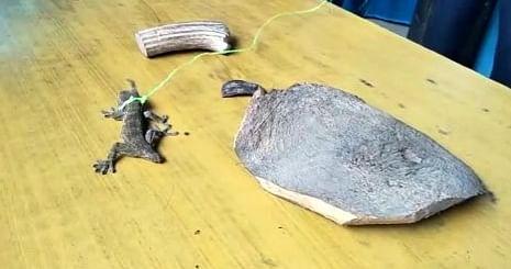 अवैध शिकारी के खिलाफ वन विभाग और पुलिस ने चलाया अभियान