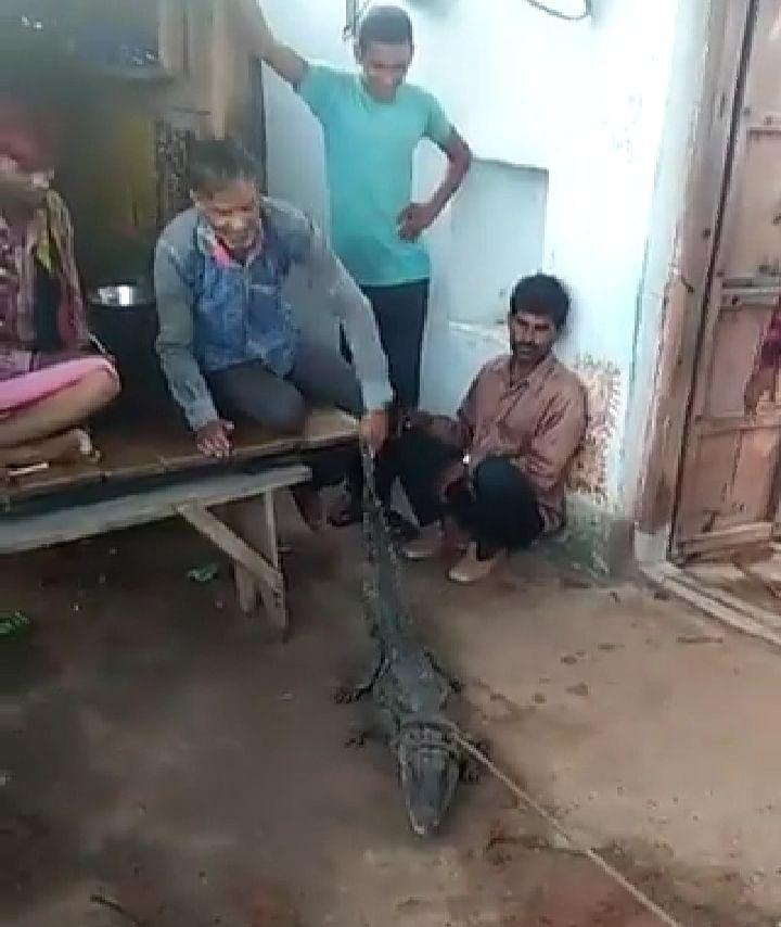 शिवपुरीः मुहारीकला गांव में निकला मगरमच्छ, लोगों ने पूंछ पकड़कर पेड़ से बांधा