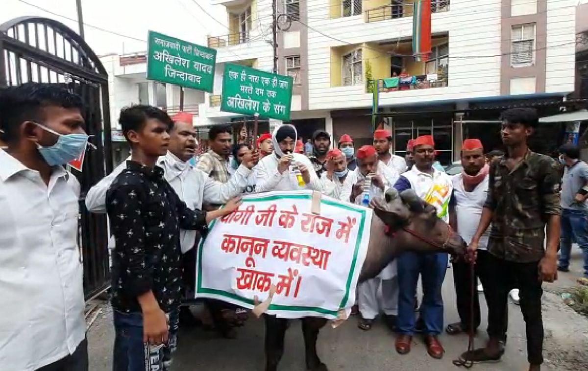भैंस के आगे बजाई बीन, सपा कार्यकर्ता बोले, 'प्रदेश सरकार को करो बर्खास्त'