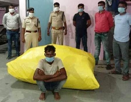 अरहर के बीच लगा रखे थे गांजे के 50 पेड़, आरोपित गिरफ्तार