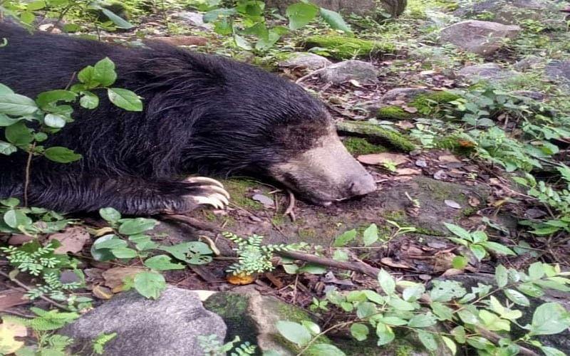 भालू के हमले से एक घायल, संघर्ष में भालू की भी हुई मौत