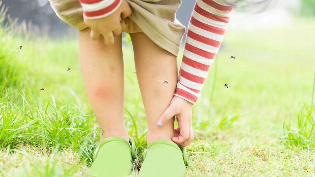 आप भी हैं मच्छरों से परेशान तो इन 5 सामग्रियों से भागेंगे अब मच्छर