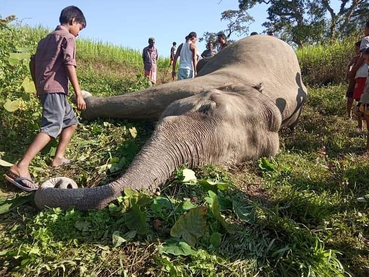 भारत-भूटान सीमाई इलाके में जंगली हाथी का शव बरामाद