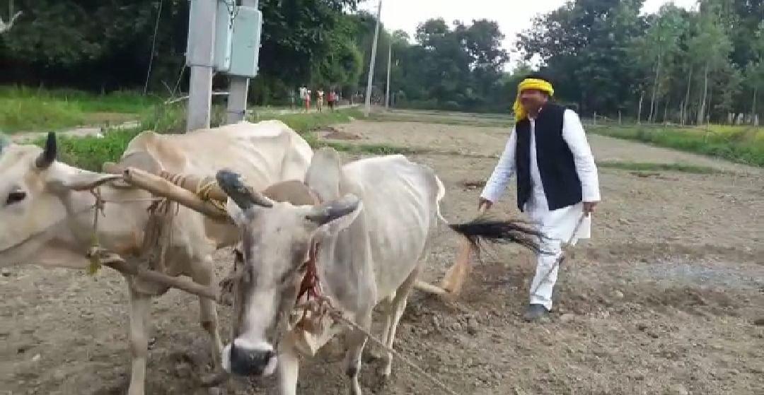 जन्मदिन पर नेताजी खेत में हल चलाये और केंद्र सरकार को किसान विरोधी बताए