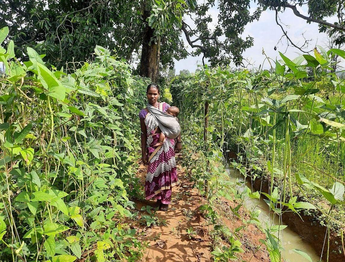 कृषि प्रणाली माॅडल से महिलाओं को हो रही है आमदनी