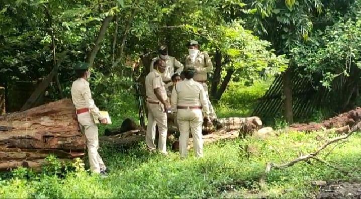 गुप्ता आरा मिल में वनविभाग की दबिश, किया गया सील